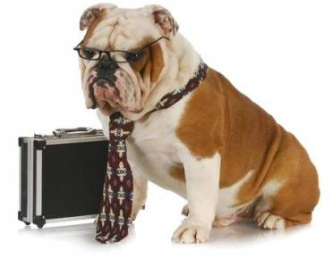 9515567-business-dog-english-bulldog-male-wearing-tie-and-glasses-sitting-beside-briefcase
