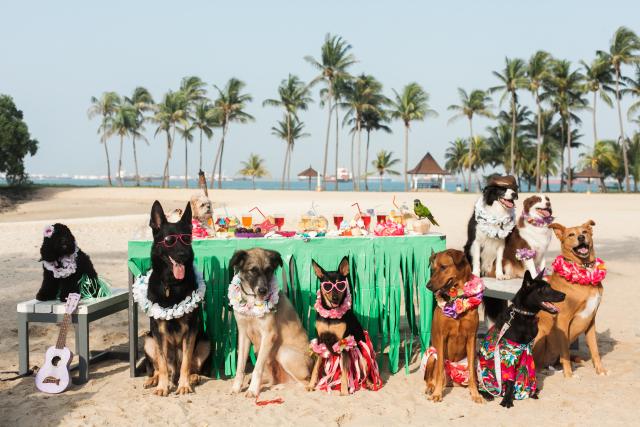 Hula Dogs